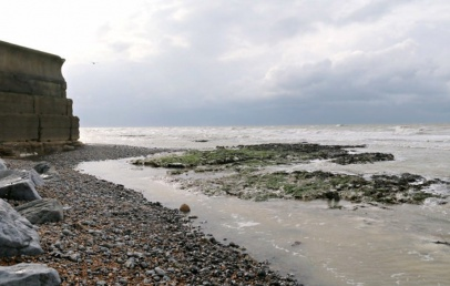 vue sur les algues au bord de mer