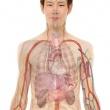 Le prolapsus génital représente la descente des organes